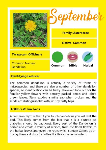 Dandelion September Membership Card